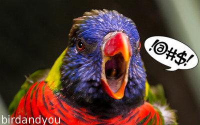 Choix solution de recharge - Page 4 Oiseau-tr%C3%A8s-cri-fort